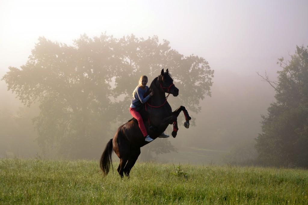 Habe ich die Wahl, wähle ich immer die Option der positiven Verstärkung. Nur so kann mir mein Pferd sein volles Potential offenbaren.