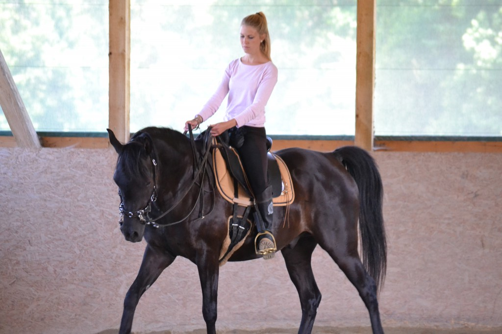 Der Druck des Schenkels wird als negative Verstärkung definiert. Ob das Pferd dies jedoch auch negativ empfinden muss, ist die Frage.