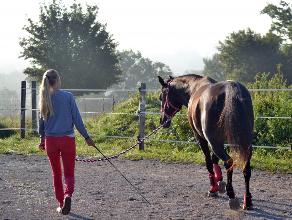 Arbeit an der Longe - doch wie genau beeinflusse ich gerade eigentlich das Verhalten meines Pferdes?