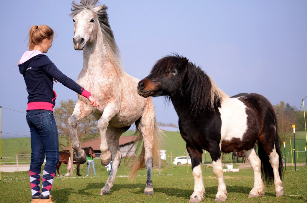 Pferde haben eine ausgeprägte Mimik, die ihr Verhalten spiegelt. Diese zu achten und zu deuten ist eine wichtige Aufgabe für uns.