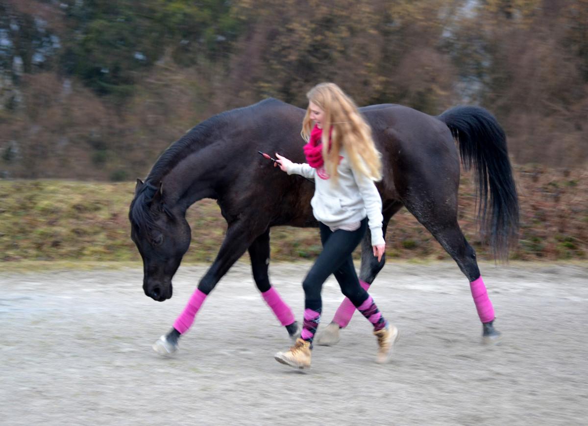 Geliebte Longieren – das ist doch das, wo die Pferde so im Kreis herum &NY_11