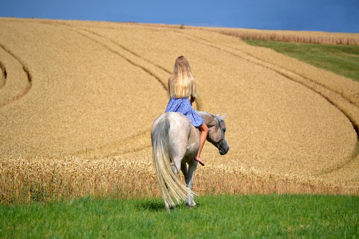 Pferd Reiten Ohne Sattel Auch Beim Reiten Ohne Sattel