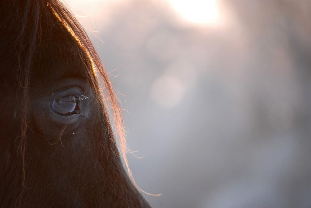 Ein Blick in die Augen eines Pferdes sagt so viel.