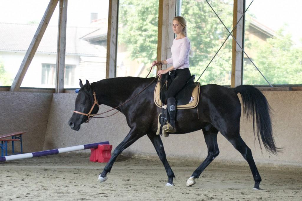 Die Arbeit an der Longe hat Khayman einen Weg gezeigt, sicher locker und ausbalanciert unter dem Reiter zu bewegen.
