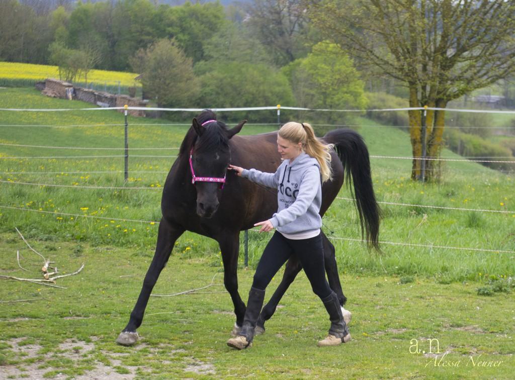 Longieren? Das würde ich meinen Pferden niemals antun, da war ich mir sicher.