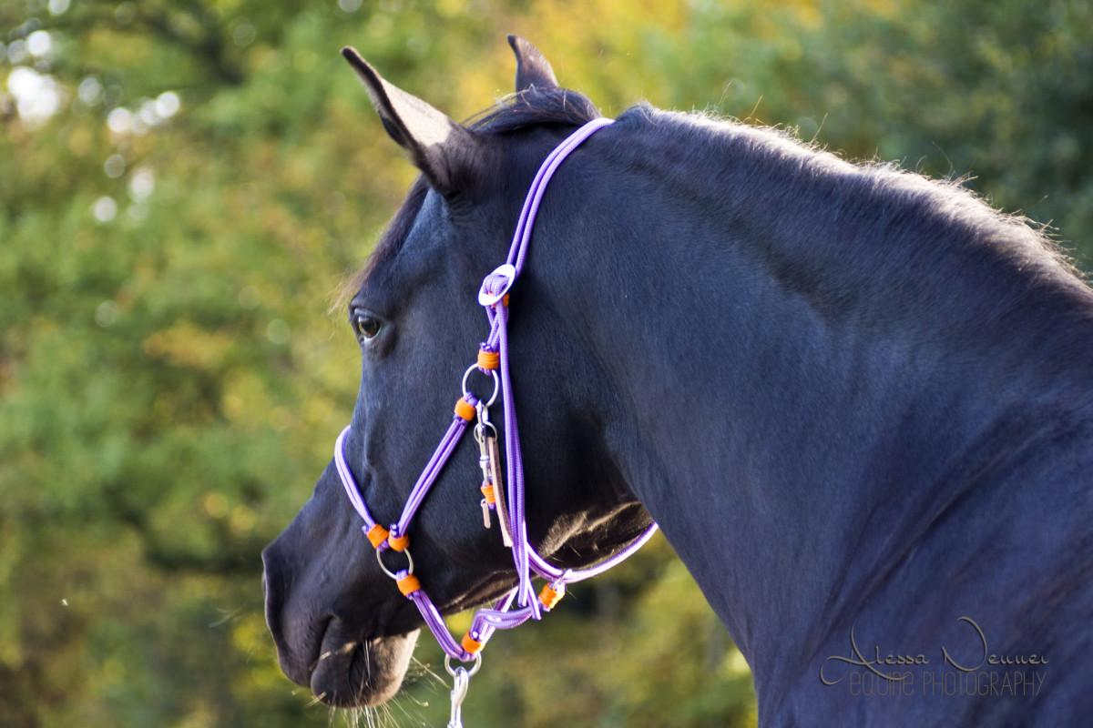 Leichte Edelstaghlbeschläge und die Anfertigung nach Maß lassen das Halfter perfekt am Pferdekopf sitzen.