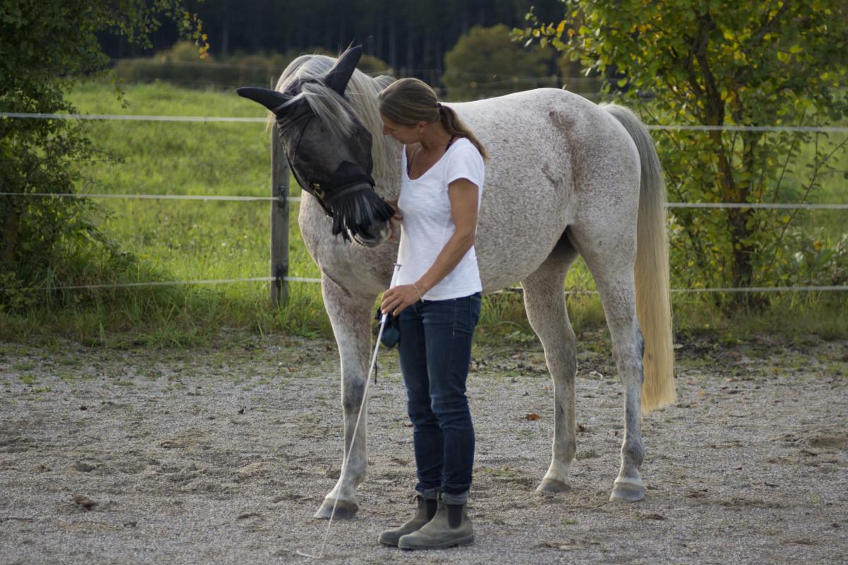 So ein tapferes Pferd hat sich eindeutig ganz viel Lob verdient!