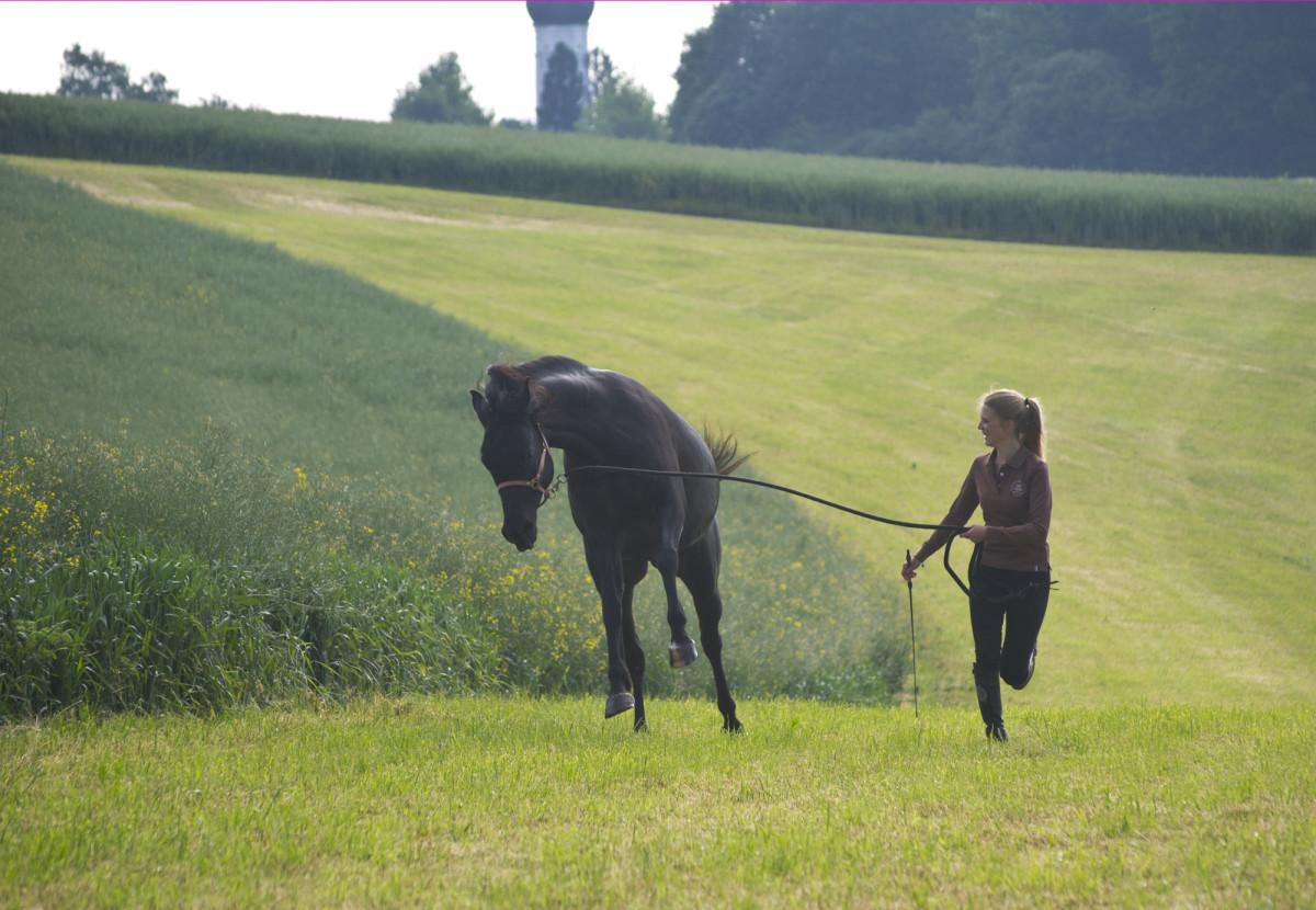 Aus einer negativ besetzen Erfahrung etwas Positives herauskitzeln und verstärken - das ist für mich wahres Horsemanship.