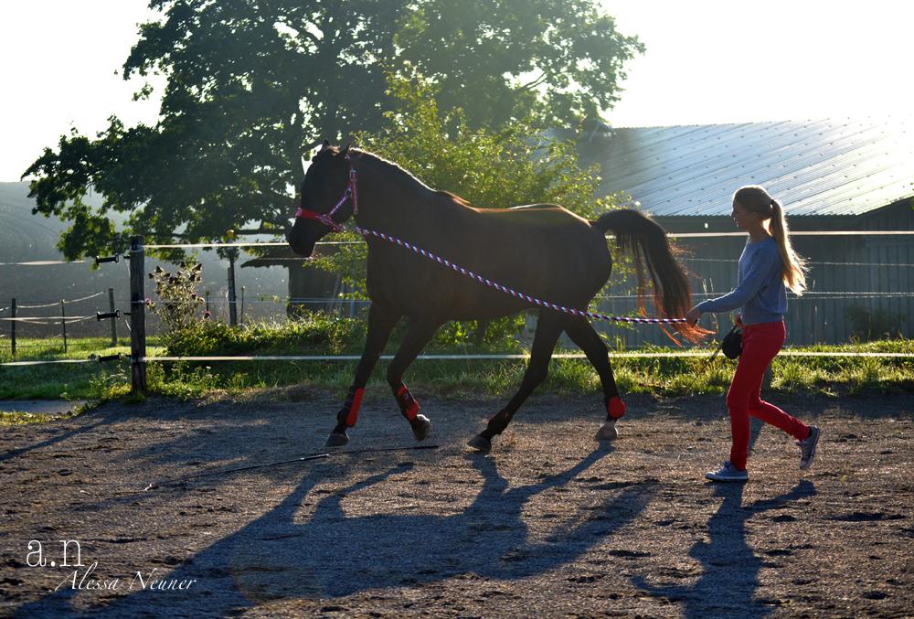 Im Idealfall hilft die Arbeit dem Pferd, sein volles Potential zu entfalten und körperlich wie geistig gesund zu bleiben.