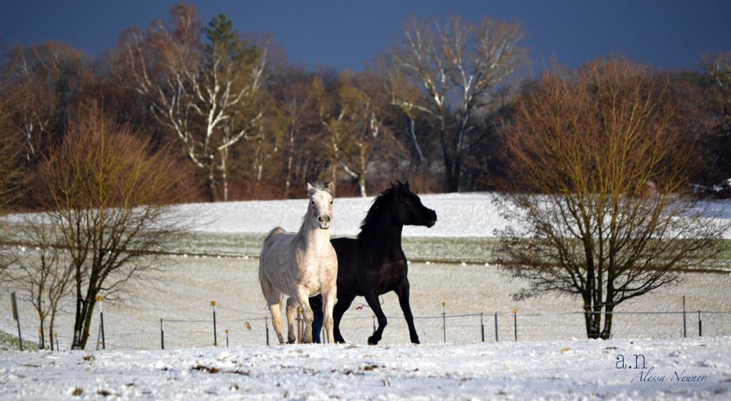 Eine Haltungsform, die dem Pferd all seine Bedürfnisse erfüllen lässt, ist Grundvoraussetzung für Erfolg in der gemeinsamen Arbeit.
