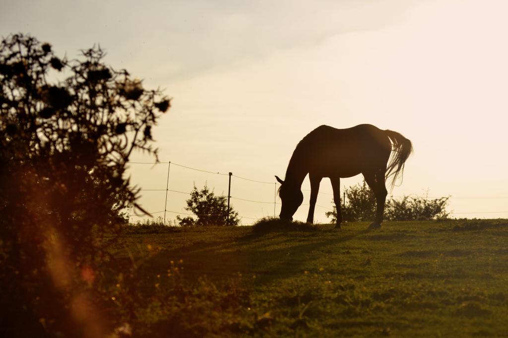 Die richtige Fütterung trägt entscheidend dazu bei, dass unsere Pferde ausgeglichen und zufrieden sind.