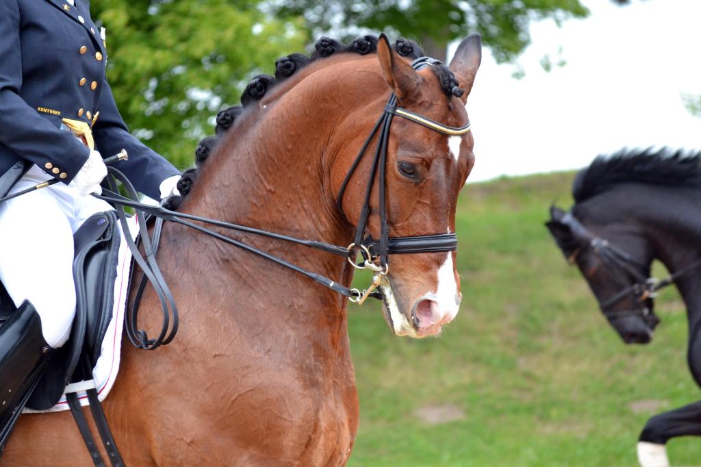 Was wäre wohl die Antwort, würde man diese beiden Pferde fragen, ob sie gerne geritten werden?