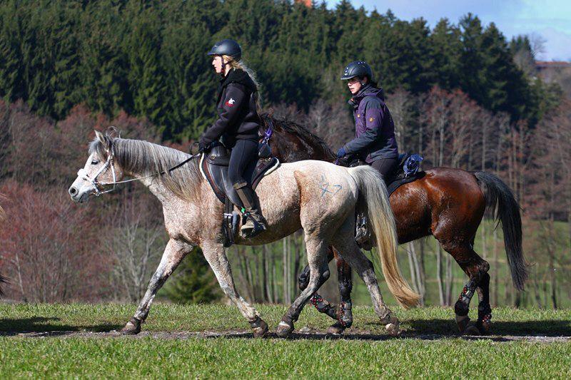 Ein gesundes, leistungsbereites Pferd ohne klassische Gymnastizierung? Ja, das kann gut funktionieren. Genauso, wie es auch nicht funktionieren kann. Das Individuum gibt vor, was für Bedürfnisse es hat!