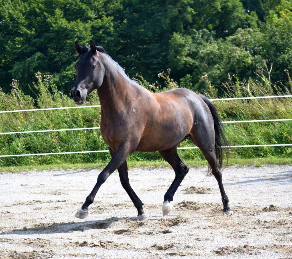 Versammlung ist nichts, was wir unseren Pferden beibringen müssen - die Bewegungen, die wir uns von einem Pferd unter dem Reiter wünschen, sind bereits vorhanden!