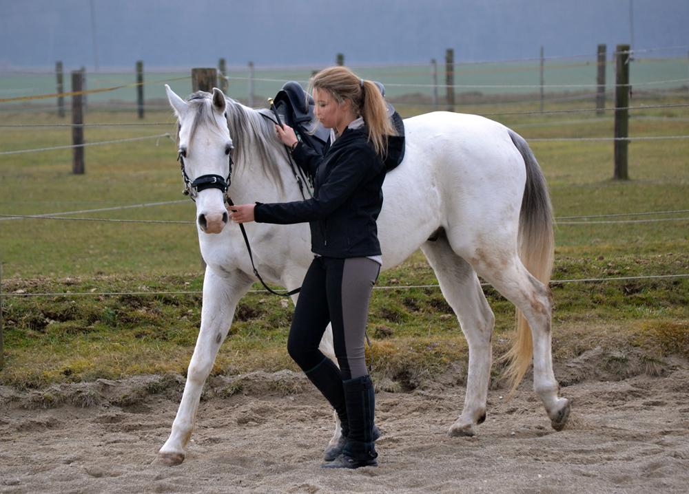 Wie sensibel ein Pferd eine Hilfe annimmt, liegt nicht an der Körperstelle, an der ich die Hilfe gebe. Es liegt daran, wie sensibel ich mein Pferd trainiere.
