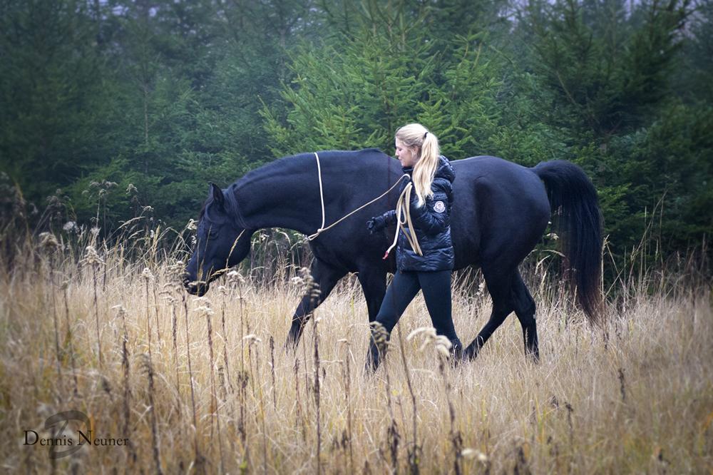 Pferde sind so sensibel, auch die kleinsten Signale von uns zu empfangen. Oft sind wir uns derer gar nicht bewusst...