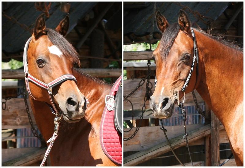 Dieses Pferd trägt hier zum 5. Mal in seinem Leben ein Gebiss. Dieses wurde stets in Kombination mit Leckerlis und nur passiv ins Maul gelegt. Dennoch spricht jeder Muskel in ihrem Gesicht dafür, wie unangenehm ihr der Fremdkörper im Maul ist.