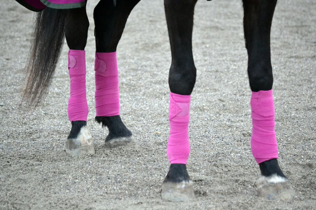 Bandagen im Stall? Nicht nur unnötig, sondern sogar sehr gefährlich für die Pferdegesundheit!