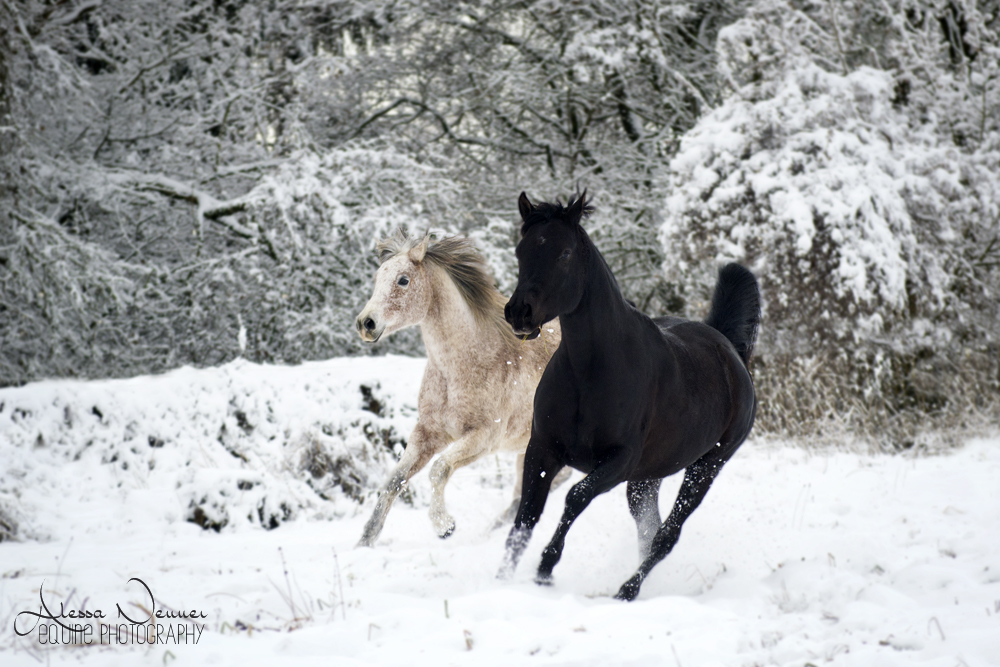 Ein Pferd ist und bleibt ein Pferd, welches zum Laufen geboren ist - ohne Beinschutz!