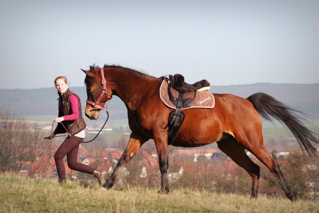 Neben dem Pferd kann ich in manchen Situationen dem Pferd Vertrauen zurückgeben, welches unter dem Sattl verloren gegangen ist.