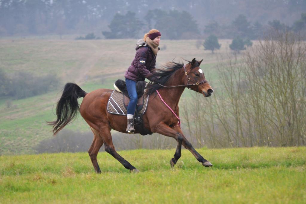 Welche Ziele stehen im Vordergrund, wenn es um mein Pferd und mich geht?