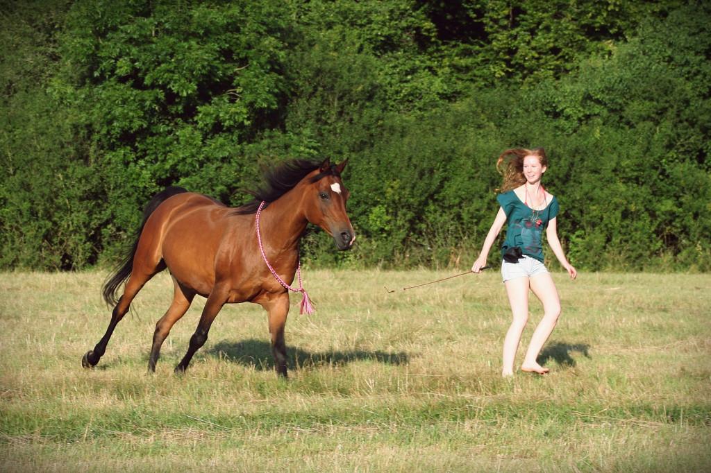 Teammitglied oder bester Freund? Was für einen Stellenwert nimmt das Pferd an meiner Seite ein?