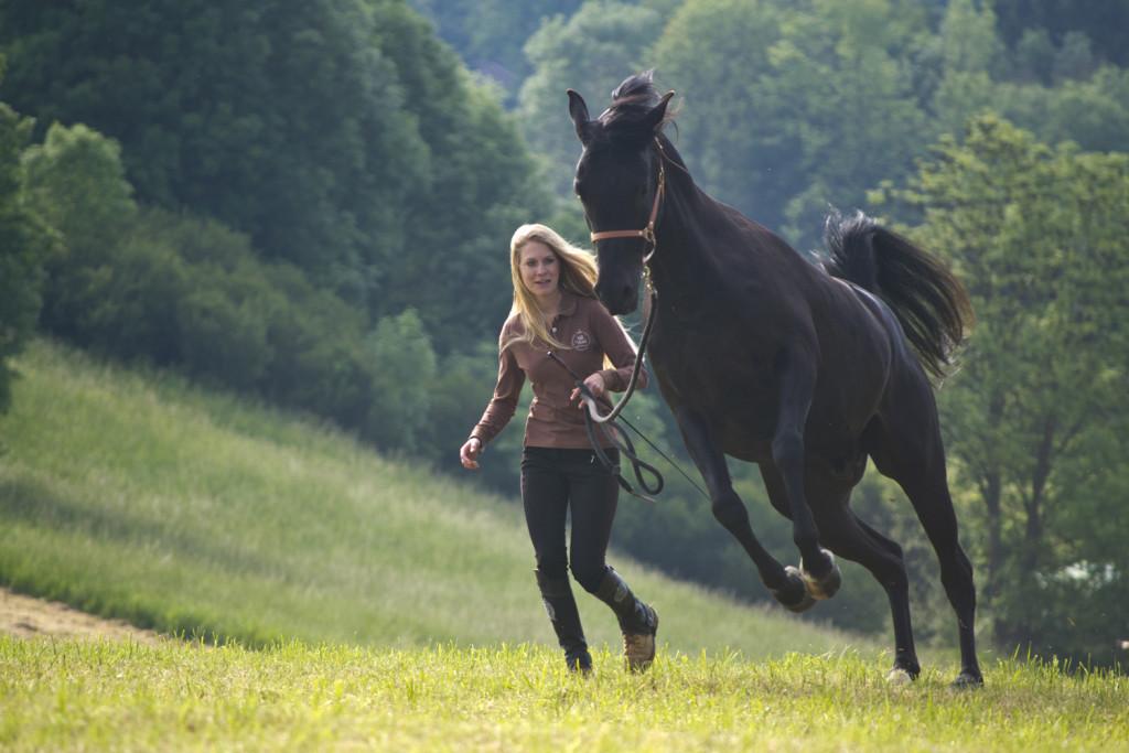 Manche Pferde reagieren (zu Recht!) sehr extrem auf ungerechtfertigtes Verhalten ihnen gegenüber...