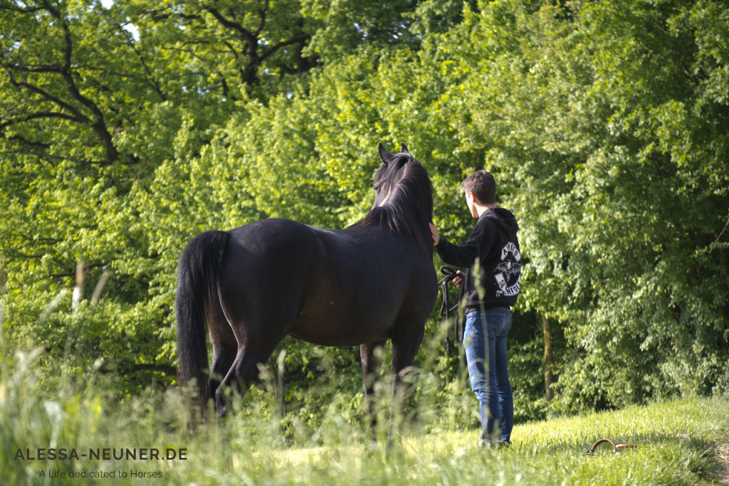 Volle Terminkalender, Stress und Hektik -  das ist eine Welt, die unsere Pferde nicht kennen. Ab und zu von dieser Welt zu entfliehen, dabei helfen uns die Pferde.
