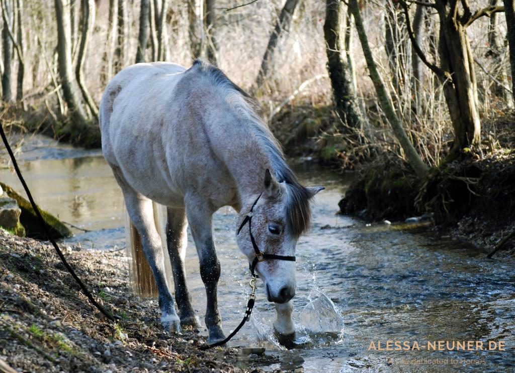Der Wind in den Haaren, das Gestein unter den Füßen, die Geräusche des Waldes: Das ist die Welt, in der unsere Pferde leben. Und in die sie uns gerne mitnehmen, wenn wir bereit dafür sind.