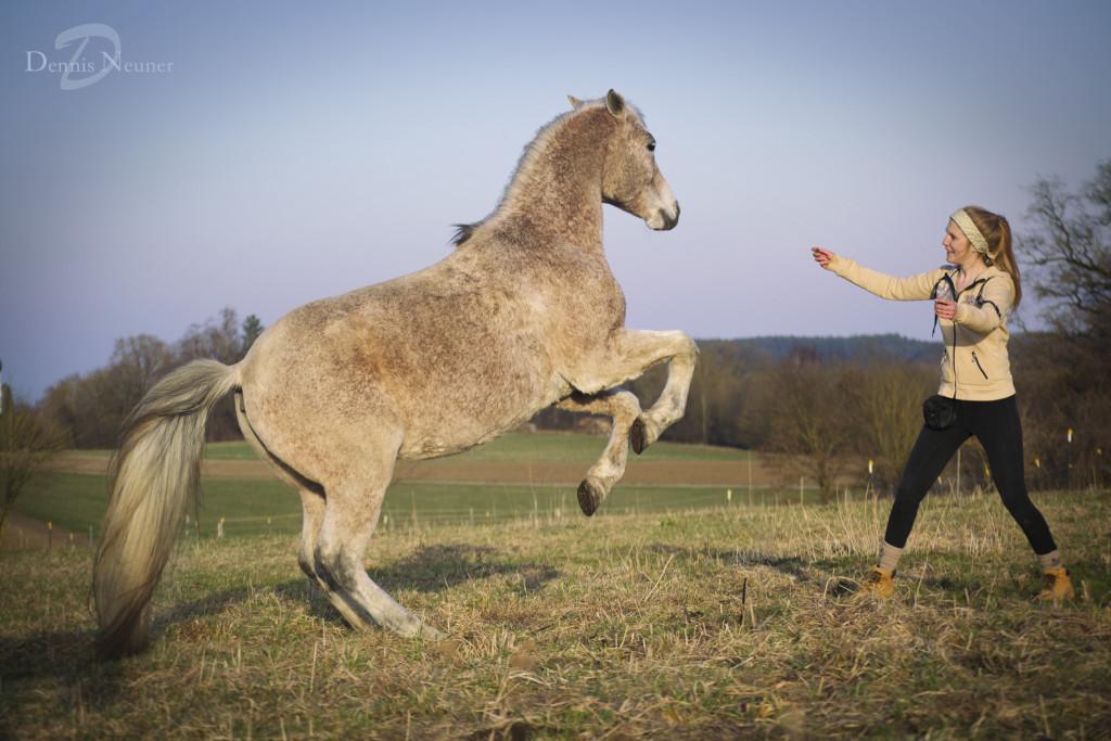 Was Häuserbau und Pferdetraining gemeinsam haben? Eine ganze Menge, wie es scheint...
