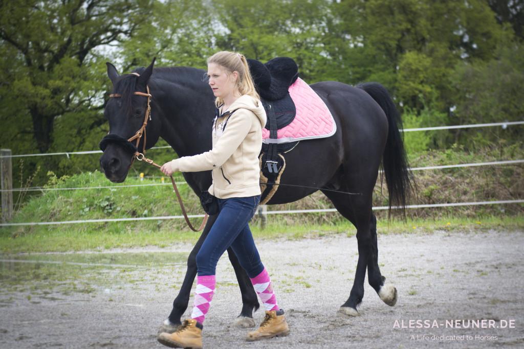 Im Gleichschritt voran - manchmal kann man neben dem Pferd besser punkten als mit falschen Stolz im Sattel.