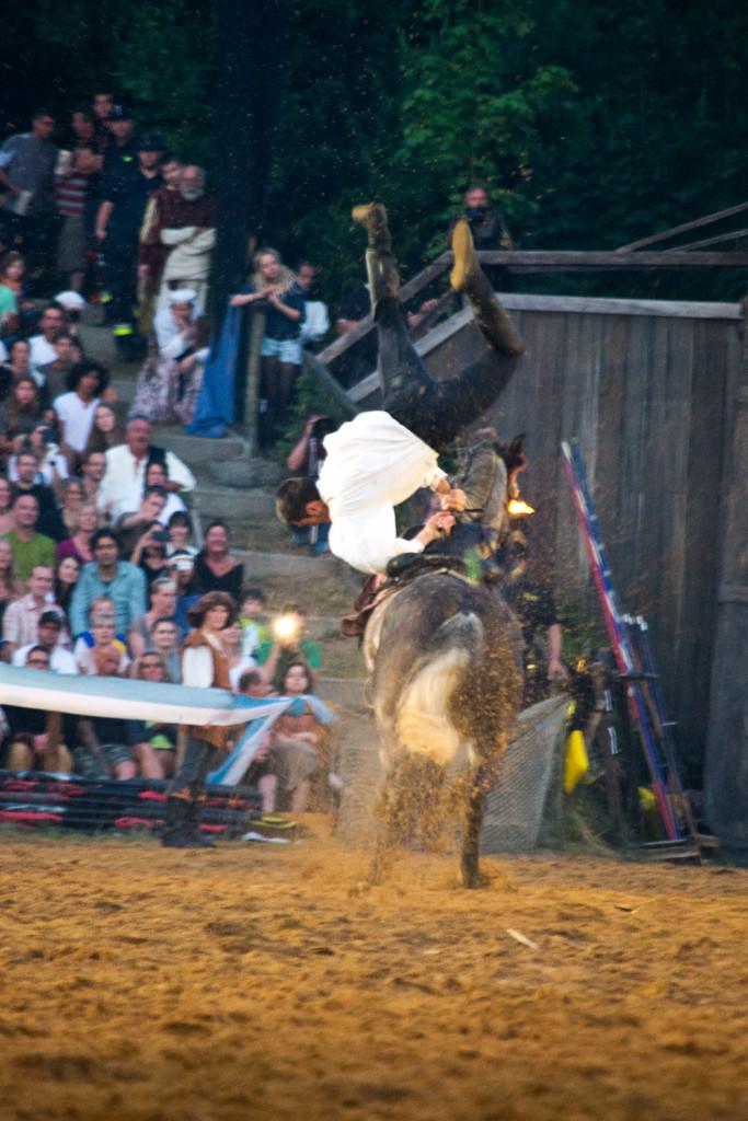Die Stunts von Reitern und Pferden sind atemberaubend. Doch wird dabei auch auf das Wohl der Pferde geachtet?