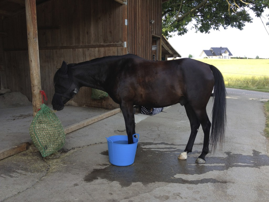 Gerade der Bewegungsapparat ist bei Pferden so ein Problemthema, bei dem sich die Besitzer oft damit zufrieden geben müssen, dass die Ursache für die Probleme nicht gefunden wird.
