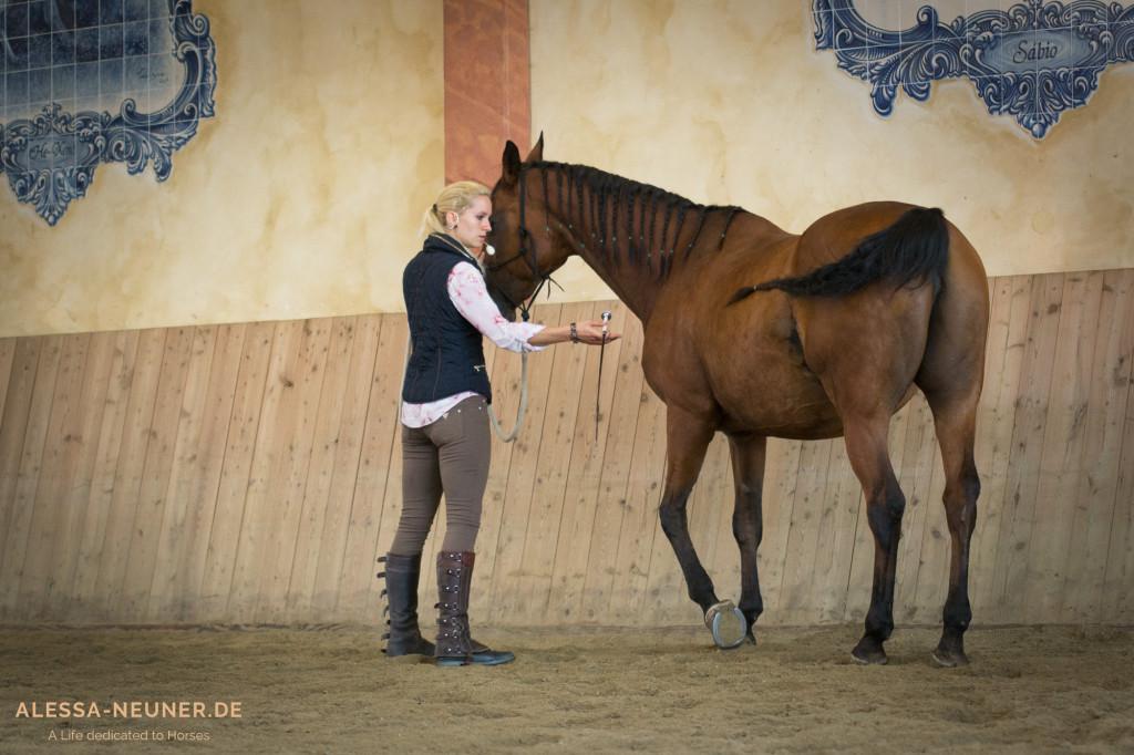 Um dem Arthrose-Pferd einen geschmeidigeren und somit schonenderen Bewegungsablauf nahe zu bringen, beginnt Viktoria mit gymnastizierender Arbeit. An der Bande entlang erarbeitet sie die ersten Schritte eines Kruppe herein.