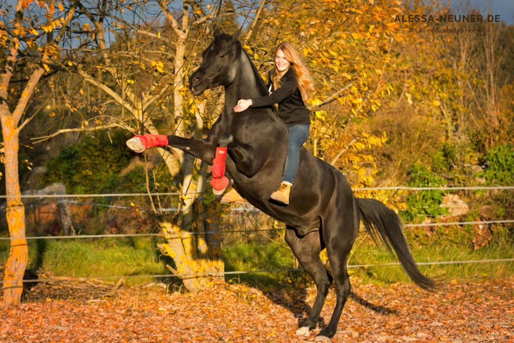 Traum oder Realität? Muss ich mich entscheiden? Oder fange ich endlich an, einfach gemeinsam mit meinem Pferd unseren Traum zu leben, unseren ganz eigenen Weg zu finden?