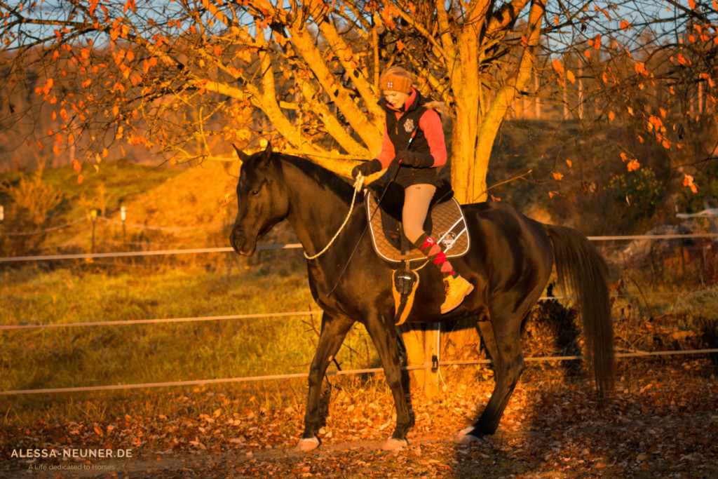 Hilfen - und sei es nur wie hier mit Halsring und Gerte - können dem Pferd Ideen anbieten, oder sie können es in einen Rahmen setzen.