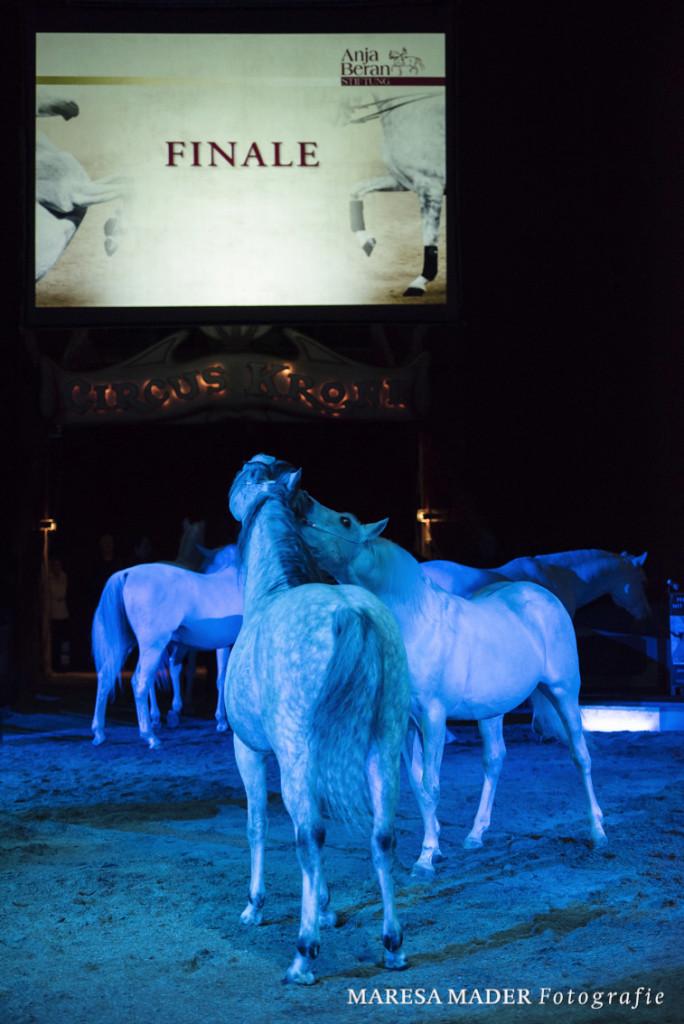 Nur ein Pferd, dessen Bedürfnisse gestillt werden, kann in der Dressurarbeit sein volles Potential ausleben.