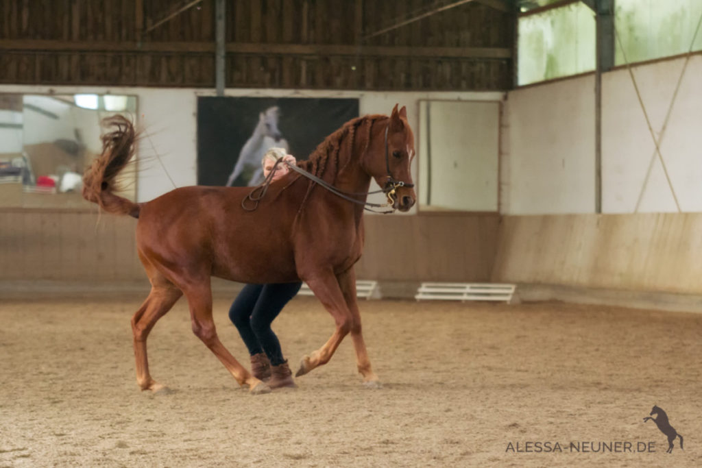 Trainerin Pia Haas mit dem Araber Ascalon in wunderschöner Versammlung in einem Rahmen, den dieses Pferd in seinem natürlichem Bewegungsablauf leisten kann.