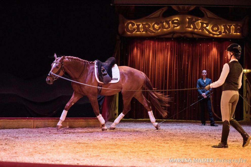 Ein junges Pferd sollte wie ein roher Diamant von uns behandelt werden.